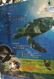 turtles in hong kong